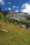 Alpine meadow Royalty Free Stock Photo