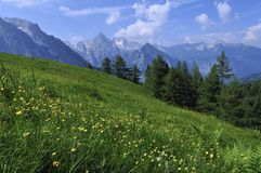 Alpine Meadow. The alpine meadow and a panorama of Totes Gebirge mountains in Austria Royalty Free Stock Photos