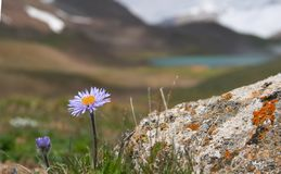 Alpine meadow 2 royalty free stock images