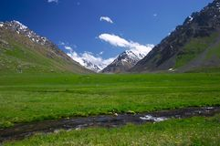Alpine meadow. Kyrgyzstan, Tian-Shan, 3500 m. altitude, june Stock Photos