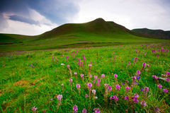 Alpine meadow Stock Images