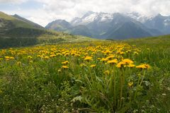 Alpine meadow. Environs of Brusson in val d'Aosta in italian Alps royalty free stock image