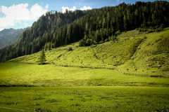 Alpine meadow Stock Images