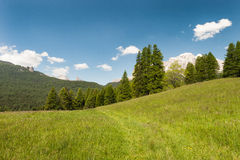 Alpine meadow. Sunny green alpine meadow with blue sky Stock Photography