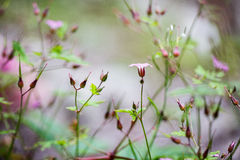 Free Alpine Meadow Royalty Free Stock Photo - 29404335