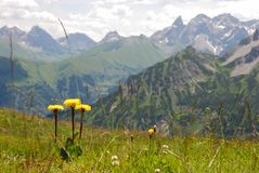 Alpine Meadow. Environs of Oberstdorf, around the Fellhorn, German Alps Royalty Free Stock Photo