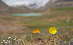 Alpine  meadow 4 Stock Image