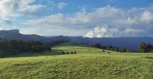 Alpine meadow. Green grass of an alpine meadow and blue sky with clouds Stock Photography