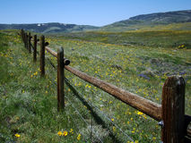 Alpine Meadow. Horizontal view of fenceline running through field of wildflowers in alpine meadow in the springtime stock images