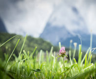 Alpine meadow against mountains and sunlight sky Royalty Free Stock Image