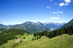 Alpine meadow allgau germany Royalty Free Stock Photo