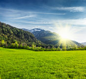 Alpine meadow in Bavaria,  Germany Stock Image