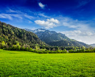 Alpine meadow in Bavaria,  Germany Stock Photography