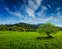 Alpine meadow in Bavaria,  Germany Royalty Free Stock Images