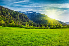 Alpine meadow in Bavaria,  Germany Stock Images