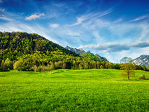 Alpine meadow in Bavaria,  Germany Royalty Free Stock Image
