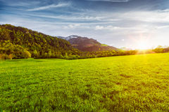 Alpine meadow in Bavaria,  Germany Royalty Free Stock Photography