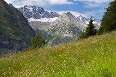 Alpine meadow with beautiful flowers Royalty Free Stock Images