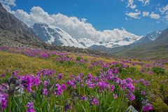 Alpine meadow in bloom Stock Photography