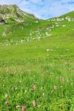 Alpine meadow Royalty Free Stock Images