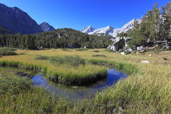 Alpine meadow in California mountains Royalty Free Stock Photos