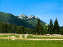 Alpine meadow in Carpathian Mt royalty free stock images