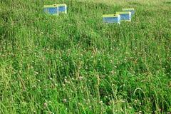 Alpine Meadow Closeup With Apiary Royalty Free Stock Photo
