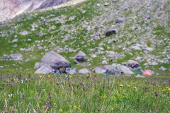 Alpine meadow with closeup flowers. Against the background of grassy slope Royalty Free Stock Photo