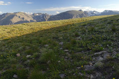 Alpine meadow in Colorado Rocky Mountains Stock Images