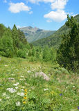 Alpine meadow covered with forest Stock Photos