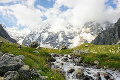 Alpine meadow with different flowers and powerful mountain river Royalty Free Stock Photography