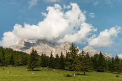 Alpine meadow in Dolomites Royalty Free Stock Photos