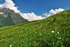 Alpine meadow and flowers, Aosta Valley, Italy Stock Images