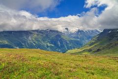 Alpine meadow with flowers. Beautiful alpine meadow in summer with vibrant flowers on a mountain in the swiss alps near Grimentz, Switzerland, region Valais Stock Images