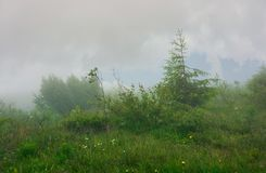 Alpine meadow in fog and mist. Beautiful and mysterious scenery inside the cloud Stock Image