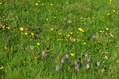 Alpine meadow Royalty Free Stock Photos