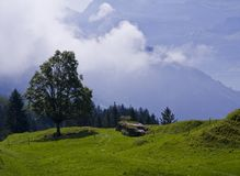Alpine meadow with a high-altitude grassland plant Royalty Free Stock Photography