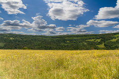 Alpine meadow. In the the highlands of the Caucasus Stock Photos