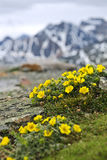 Alpine meadow in Jasper National Park Stock Image