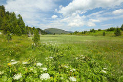 Alpine meadow Stock Image