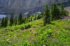 Alpine Meadow Royalty Free Stock Image