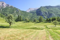 Alpine Meadow near Tolmin, Slovenia. Alpine Meadow in Julian Alps above Tolmin, Slovenia Stock Photography