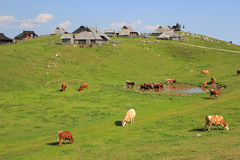 Alpine meadow pasture, Slovenia Royalty Free Stock Image