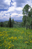 Alpine meadow in the Rockies Royalty Free Stock Photography