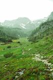 Alpine meadow in Rocky Mountains Stock Image