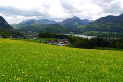 Alpine meadow scenery Royalty Free Stock Images