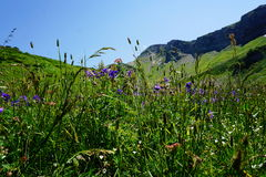 Alpine meadow in Sochi Stock Images