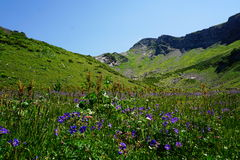 Alpine meadow in Sochi Royalty Free Stock Image
