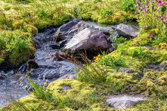 alpine meadow with streams and stones at mount rainier stock images