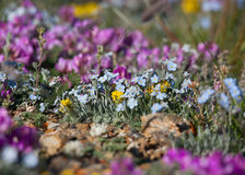 Alpine meadow in the summe Stock Images